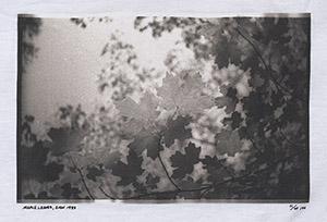 Maple_Leaves_Preview